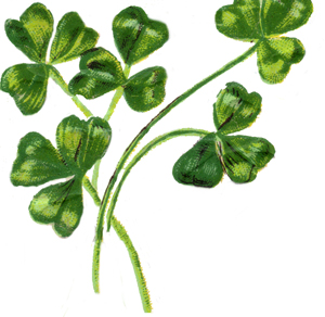 irish-shamrock-4