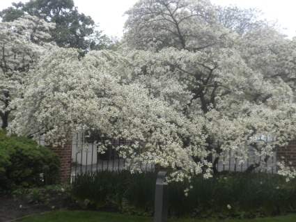 And flowering trees and flowers everywhere in the church yard